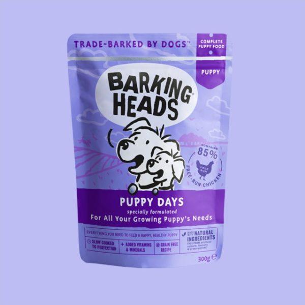 BH Puppy purple background