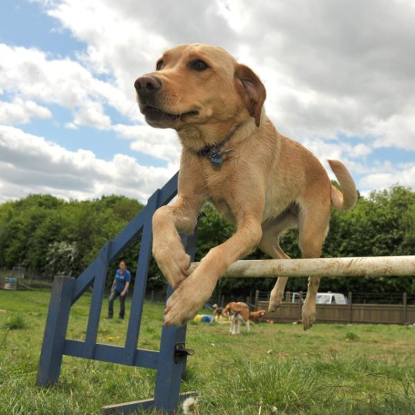 Dog jumping 640x640